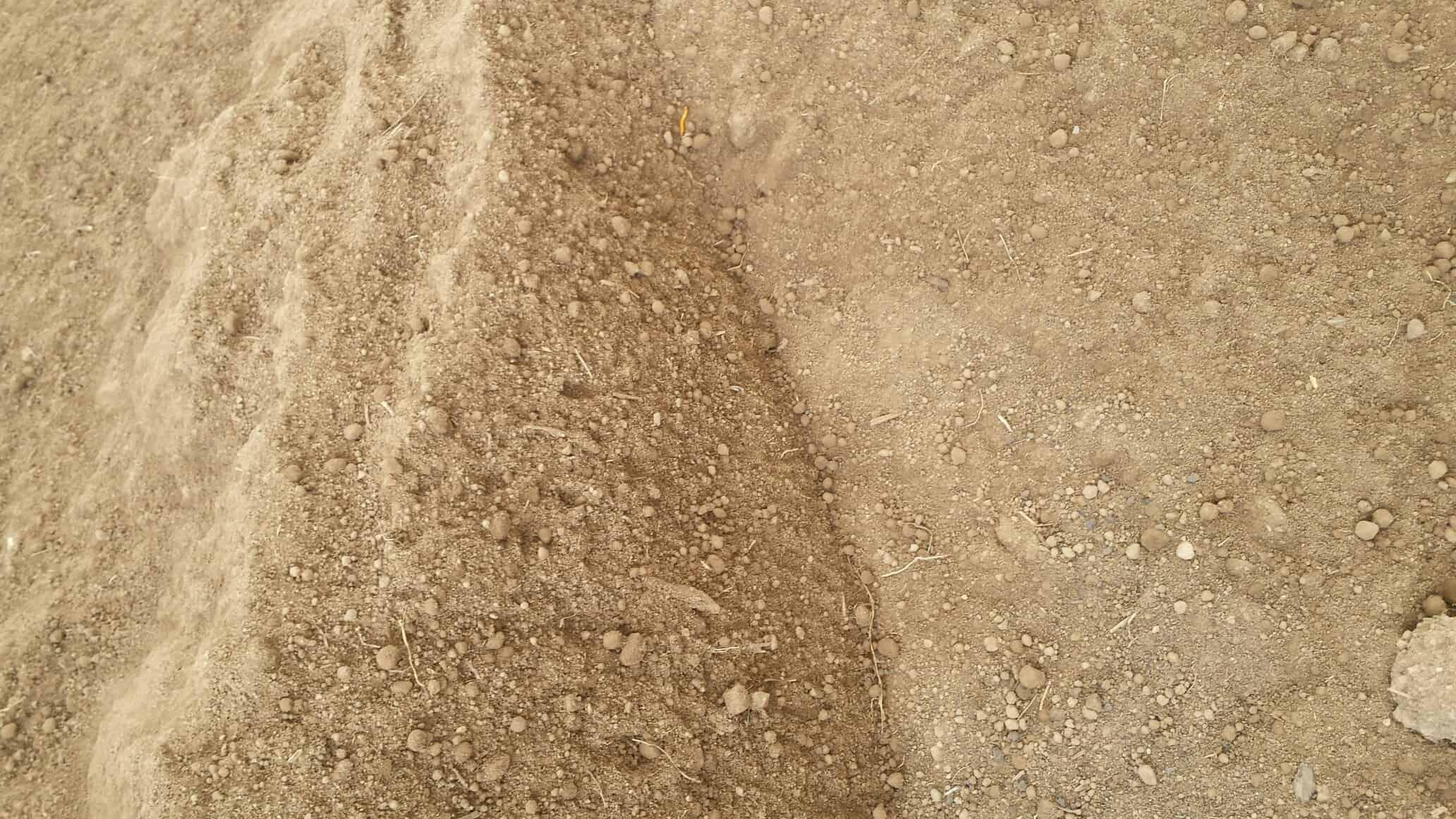 Sandy Loam topsoil